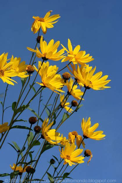 fiore topinambur cuoche dell altro mondo vellutata di topinambur con pinoli