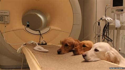 do dogs brains brain scans reveal vocal responses