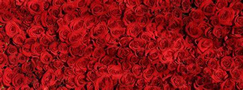 Blumen Die Lange Halten by L 228 Nger Frisch Halten Blumenpapa