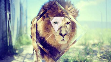 wallpaper tumblr lion 21 hipster backgrounds wallpapers images pictures
