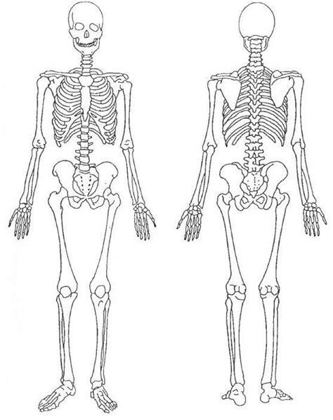 pelvis esqueleto humano frente cibertareas esqueleto humano thinglink