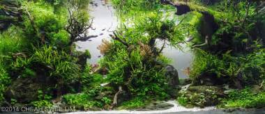 The Best Aquascape by Best Aquascapes Of 2014 Aquarium Info