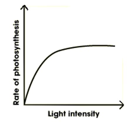 How Does Light Intensity Affect Photosynthesis by Gcse Bitesize Factors Affecting Photosynthesis