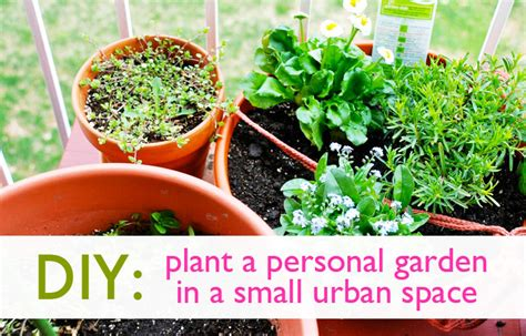 diy   plant  personal garden   small urban space