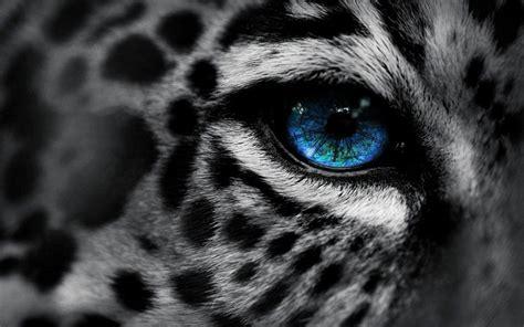Cat Eye Biru Top cats