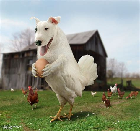chicken puppies 1000 images about animanibles 2 in 1 on photo manipulation pets and