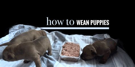 how to wean a puppy weaning puppies when do puppies start solid foods