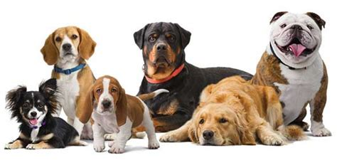 what breed is best for me quiz what breed is right for your family proprofs quiz