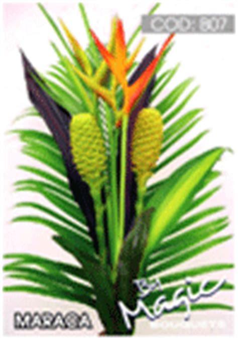 tropical plants wholesale wholesale tropical flowers