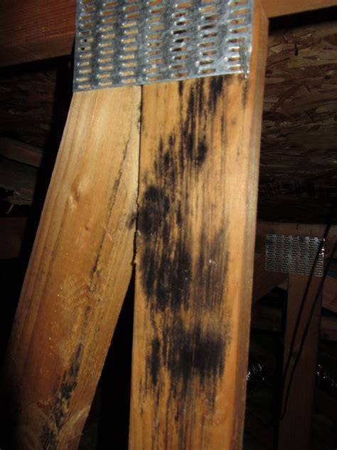 Black Mold In Attic - mold what is this stuff in the attic home improvement