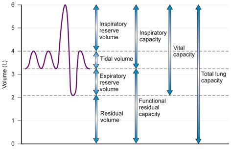 normative pattern definition pulmonary function testing