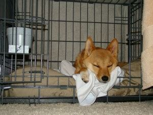 should puppy sleep in crate using a crate effectively for a or puppy coops and cages