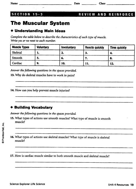 Muscular System Worksheet by Pictures Muscular System Labeling Worksheet Gavilles