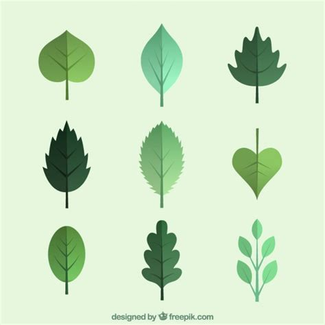 vector leaf tutorial image gallery leaf illustration