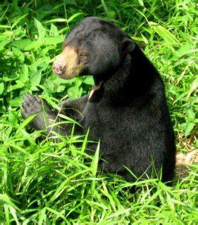 Javara Madu Hutan Hitam Kalimantan Black Honey arya wira bumi wisata petualangan hutan tropis kalimantan fear factor sejati