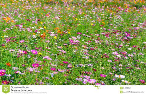 Garden Flowers A Z Flowers Garden Stock Photography Image 34615202