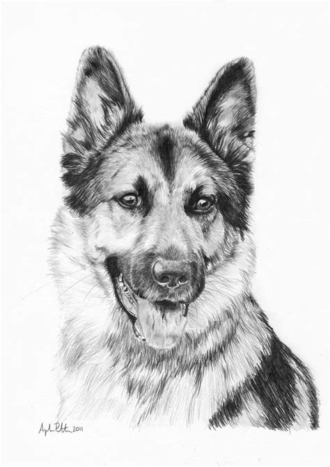 german shepherd drawing zac german shepherd by loukya on deviantart