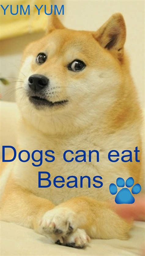 can dogs eat beans 17 best images about inspiration on my