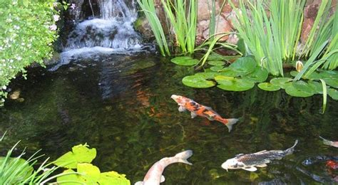 Top 10 Kitchen Designs by 7 Ideas For Building A Koi Fish And Backyard Pond Home