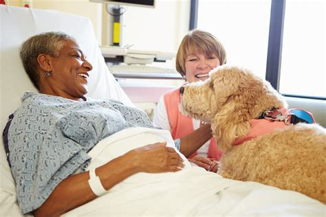 Blind Dogs Care Stroke In Elderly Adults Prognosis And Treatment I Griswold