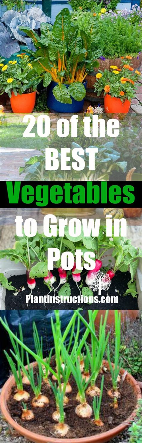 vegetables grown in 20 best vegetables to grow in pots plant