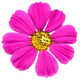Lebanon Flower Shop - welcome terra flora