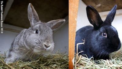 A Week To Forever Zen bunnies of the week the rabbit residence rescue