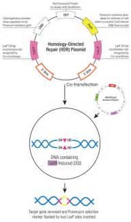 crispr cas9 system bio connect