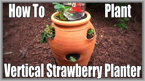 How To Plant A Strawberry Planter how to plant vertical strawberry planter