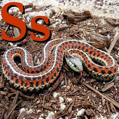 libro fg h reptils britain wikichicos alfabeto con animales s wikilibros