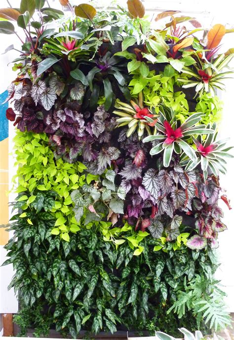 Plants Used In Vertical Gardens Plants On Walls Vertical Garden Systems Tropical