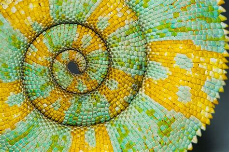 patterns in nature article the science behind nature s patterns smithsonian