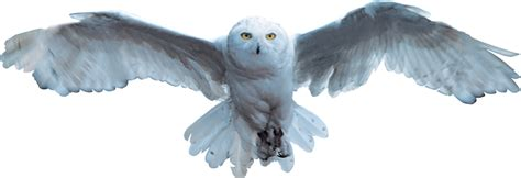 harry potter s owl hedwig yahoo image search results