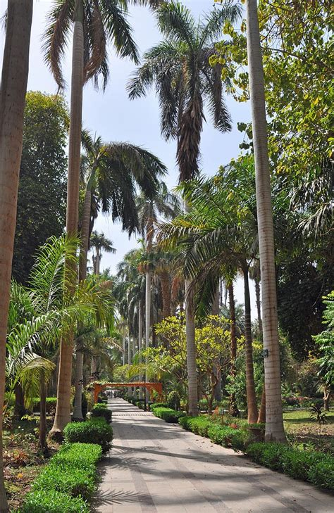 i love egypt beautiful gardens 1 10 best images about aswan botanical gardens egypt on