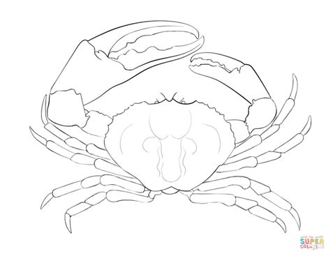 king crab coloring page pics for gt king crab drawing
