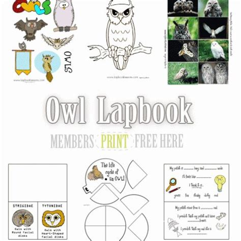 printable owl lapbook 17 best images about unit studies and lapbooks we might do