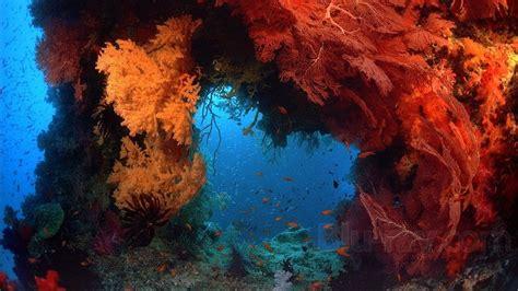coral reef adventure blu ray ign coral reef adventure blu ray
