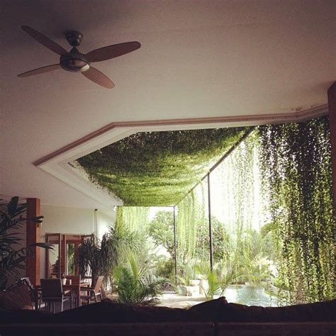 home designs and decor beautiful amazing indoor plants moon to moon happy hanging house plants