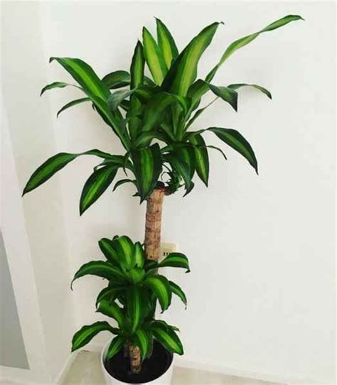 beautiful indoor plants 15 beautiful house plants that can actually purify your