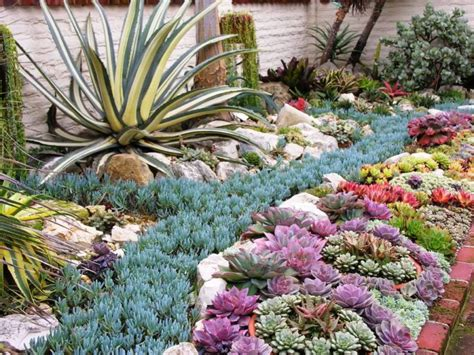 landscaping front yard landscaping ideas succulents