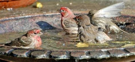 birds need to bathe too