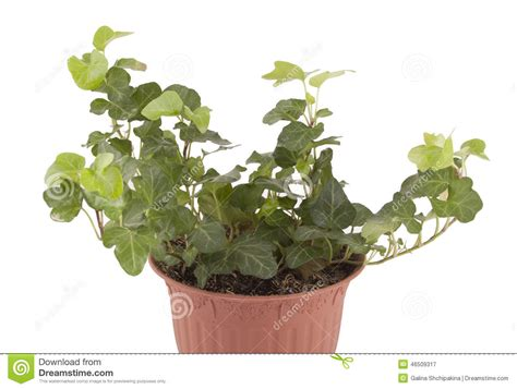 poudre blanche sur plantes d int rieur support de plantes dinterieur oveetech