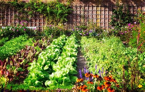 Vegetable Gardening Plan A Beautiful Vegetable Garden