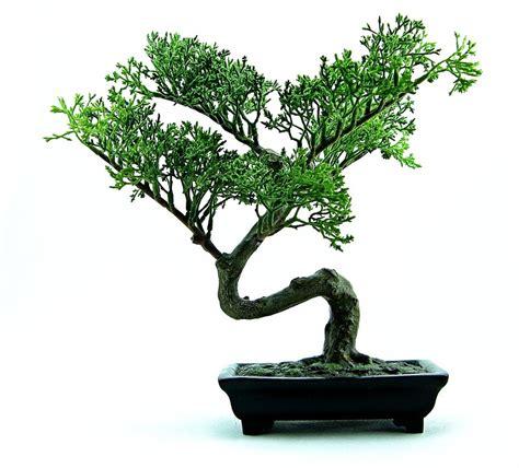 Pohon Bodhi Kecil Sedang Besar foto gratis bonsai pohon hijau tanaman gambar gratis di pixabay 316573