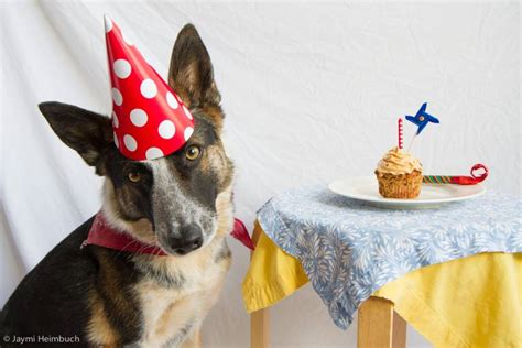 puppy s birthday how to make a birthday cake mnn nature network
