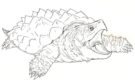snapping dragon turtle outline by fachhillis on deviantart