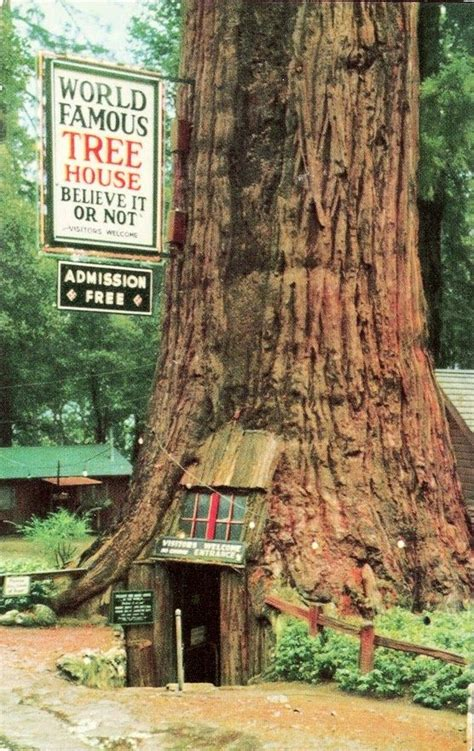 famous tree houses world famous treehouse near leggett ca usa redwood