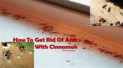 diy tip how to get rid of ants with cinnamon page 2 of