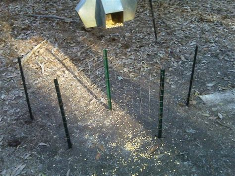 Deer Antler Shed Trap by Antler Traps Oklahoma Shooters