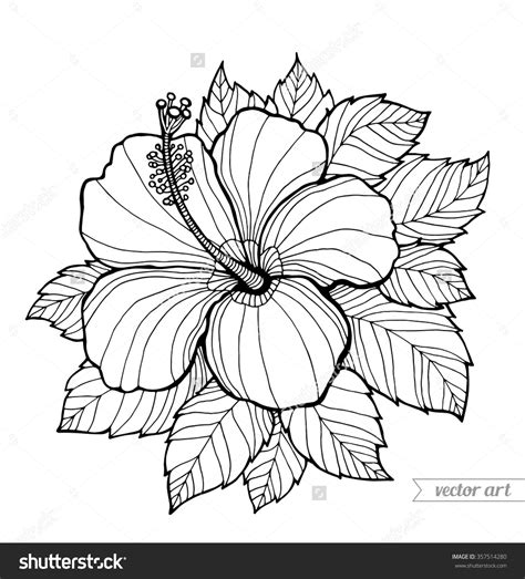 yellow hibiscus coloring page hibiscus free coloring pages on art coloring pages